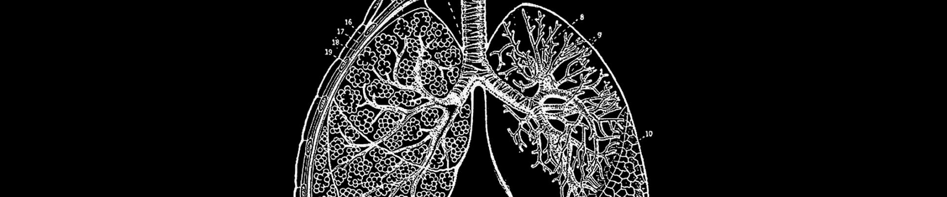 Vintage blackboard image of lungs