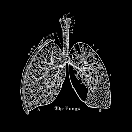 Vintage engraving of lungs on chalkboard
