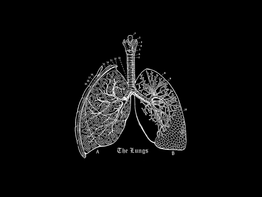 Vintage blackboard image of lungs