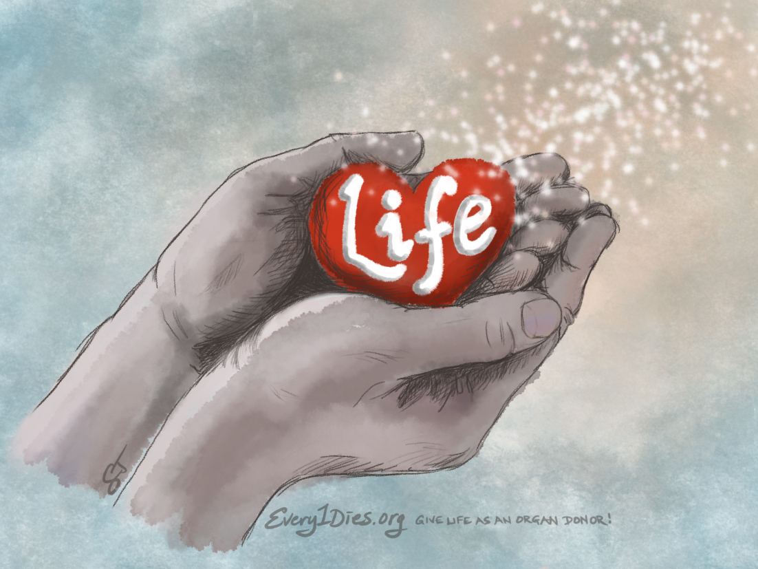 Hands holding the gift of life - organ donation