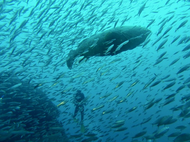 scuba diver with fish - every1dies.org