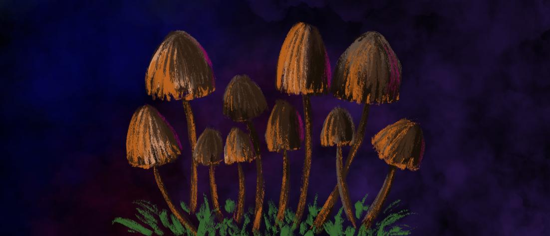 magic mushrooms - orangish psilocybin mushrooms on a velvety purple background