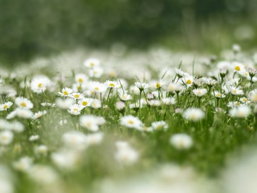 tiny flowers in grass