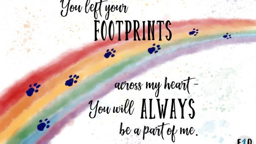 Rainbow with dog/cat prints fading to distance. (Rainbow bridge). Words You left your footprints across my heart - you will always be a part of me.