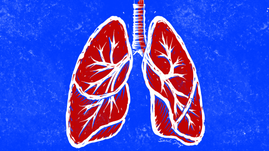Lungs-linolium cut style in blue, red and white